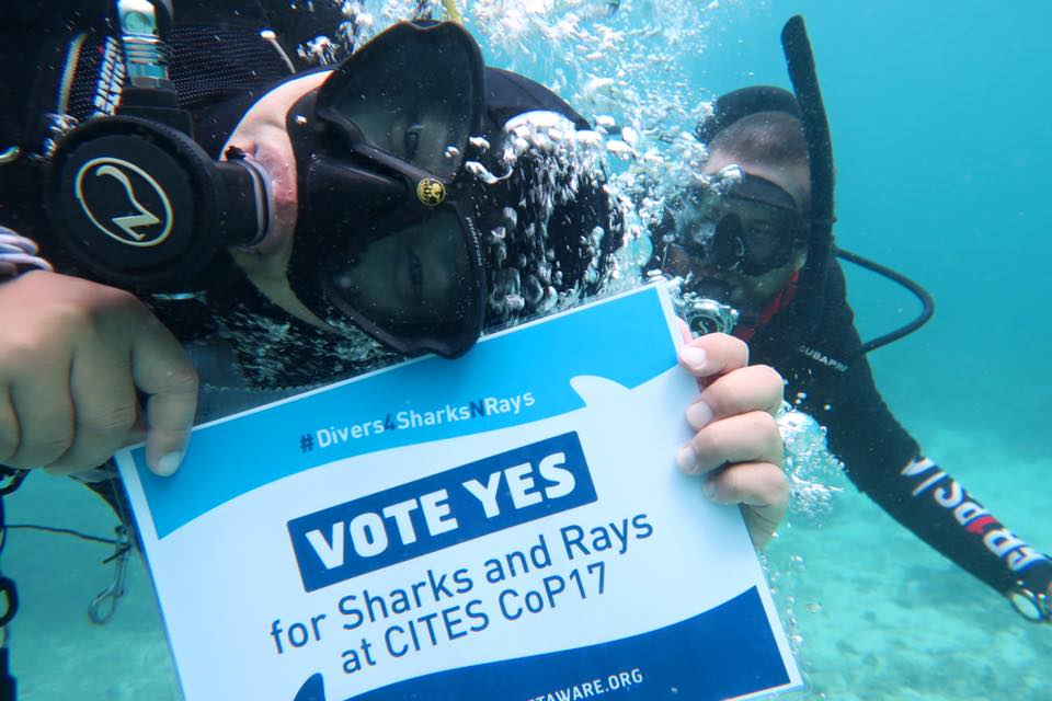 Project Aware: #divers4sharksnrays