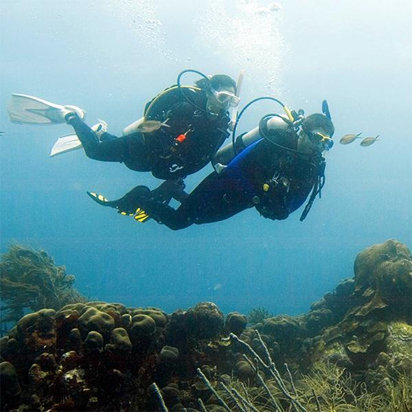 Online - Deep Diver