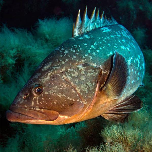 diving-a-ustica