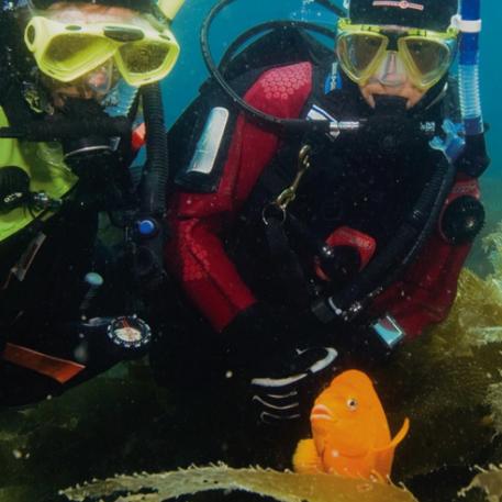 Online - Dry Suit Diver