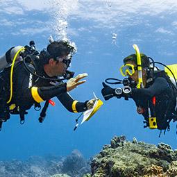 Acquista il tuo Dive Theory Online!